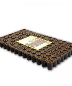 Eazy Plug Stecklingstrays 104Stk. rund groß